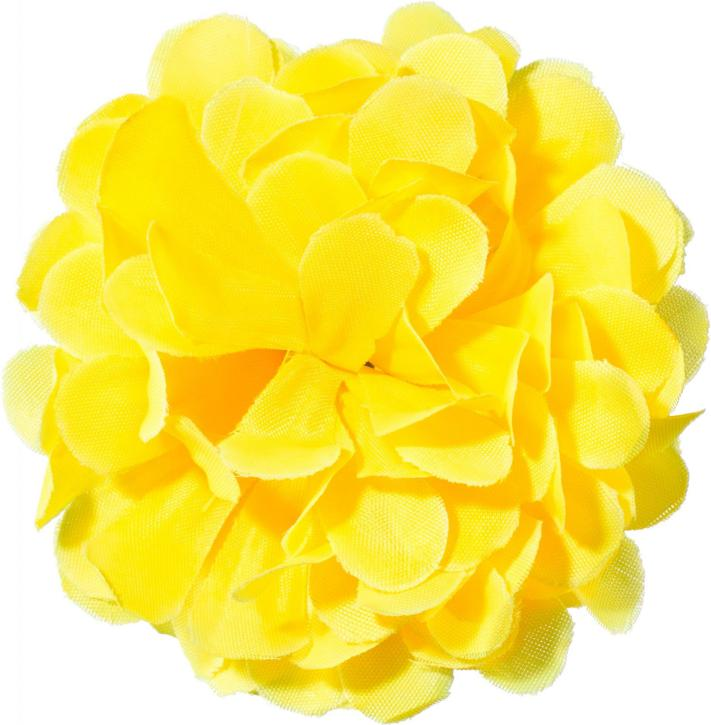 Ansteckblume Chrysantheme gelb